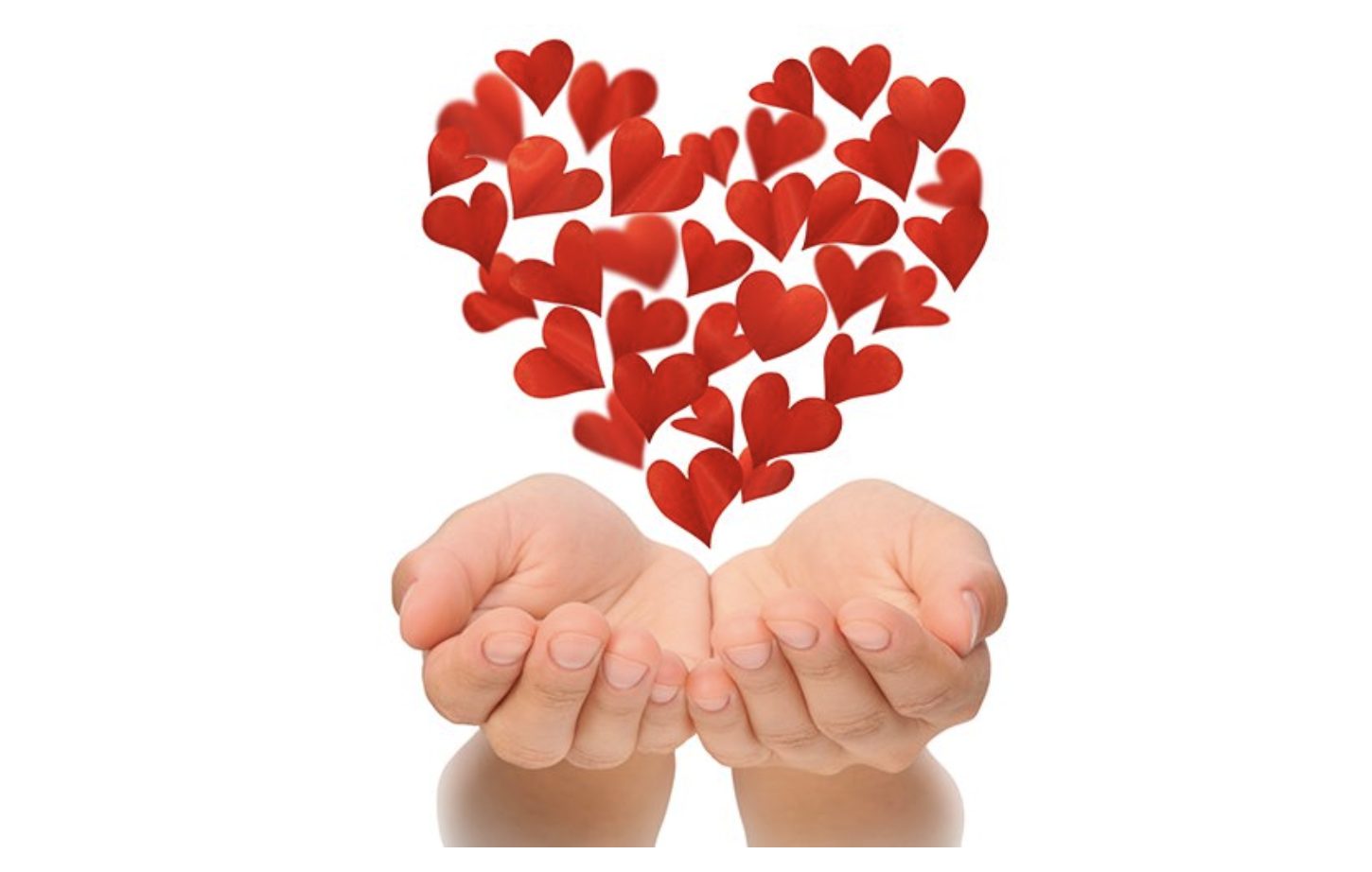 Flowers in heart shape hovering over hands